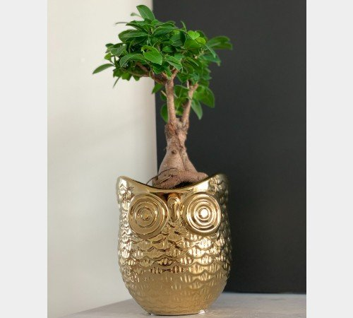 Bloempot 'Owl', trendy bloempot goud uil, moderen bloempot, 44103GOU-Jungle, 4